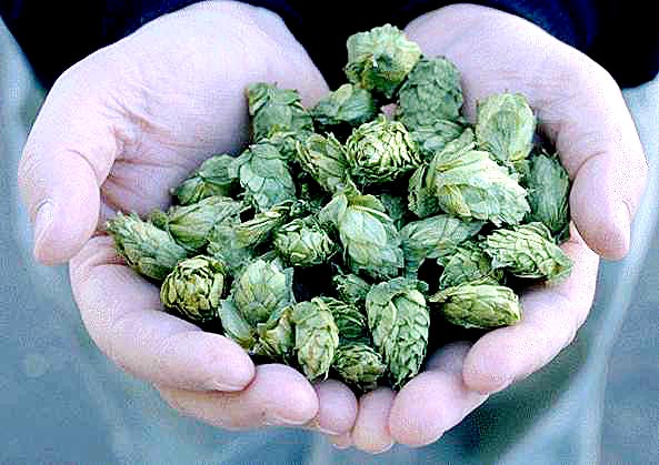Hops and breast enhancement or growth